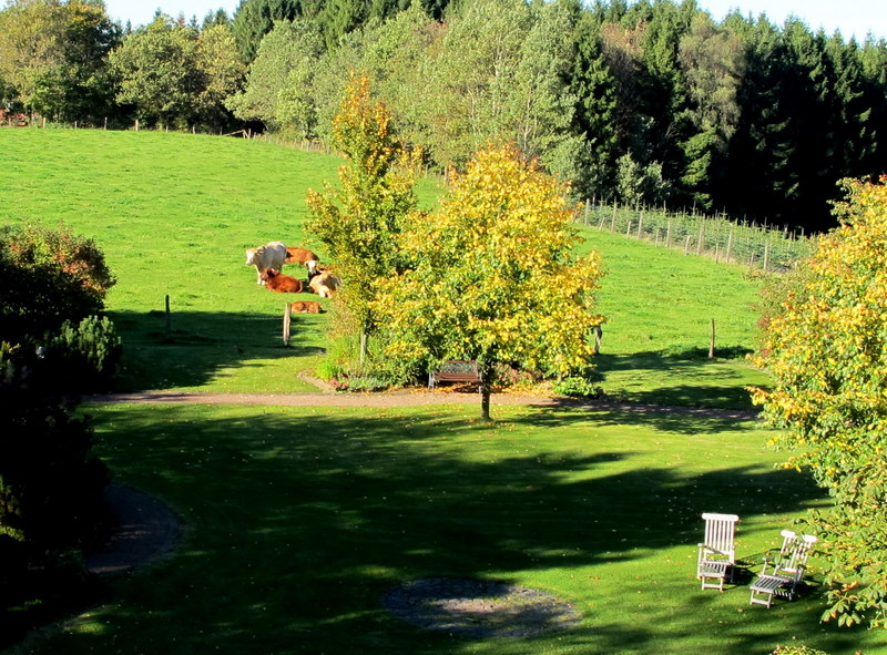 Feld hinter Waldhaus 2