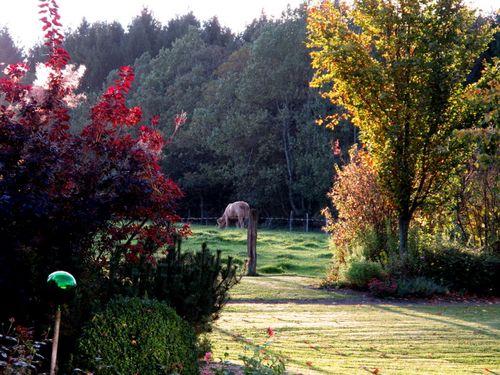 Feld hinter Waldhaus