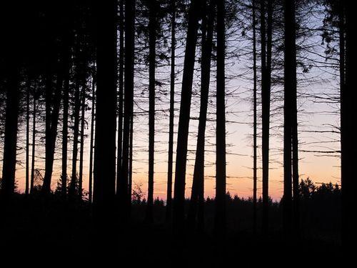 Baueme Sonnenuntergang