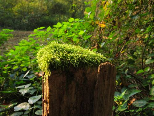 Waypost with Moss 1