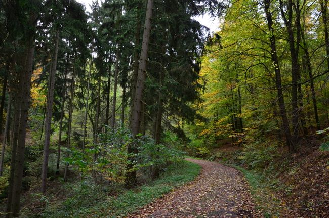 Path with Fir and Beech Trees near Löwenburg