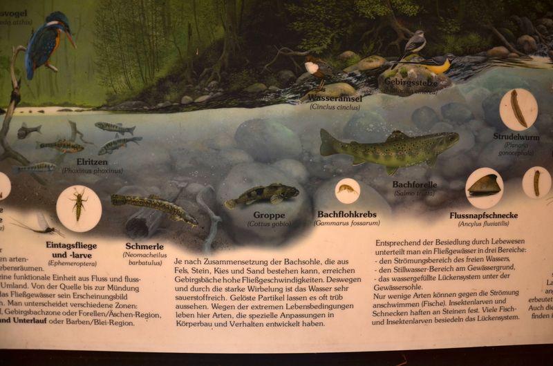 Detail of mountain creek wildlife info poster