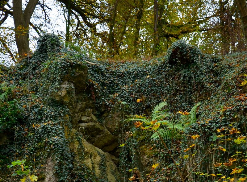 Ivy Covered Rocky Outcrop
