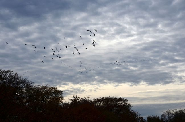 Migrating geese and doves in Neander valley