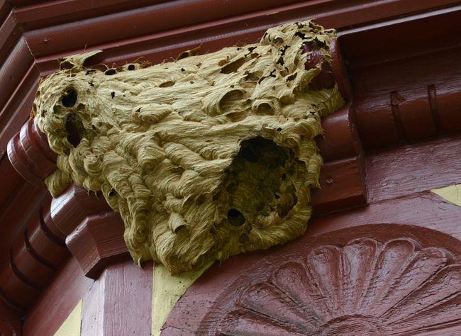 Insect Nest Haus Neuglück