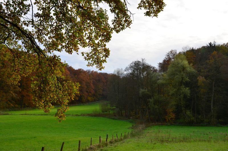 Meadows in Neander valley