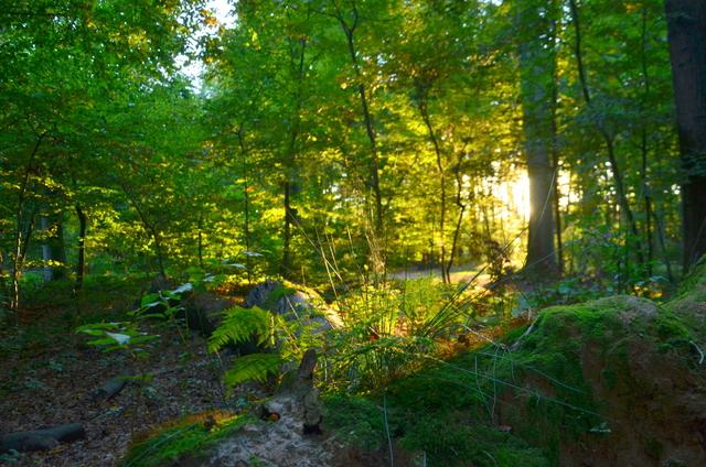 Benrath Schlosspark Light on Decaying Log