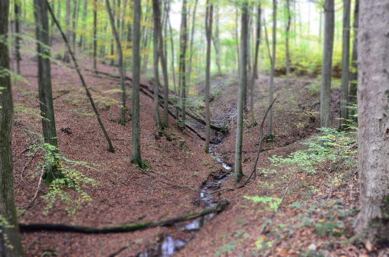 Creek near Löwenburg