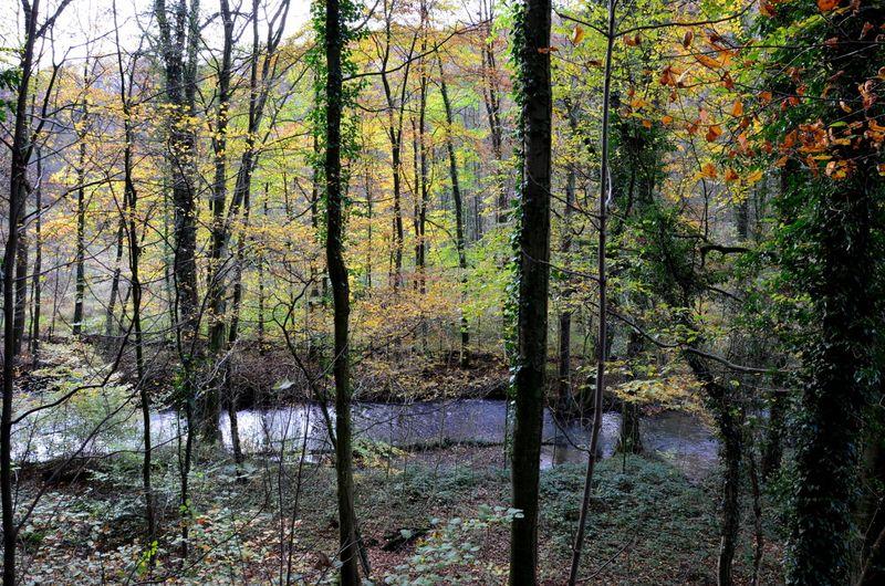 Düssel river in fall Neander valley