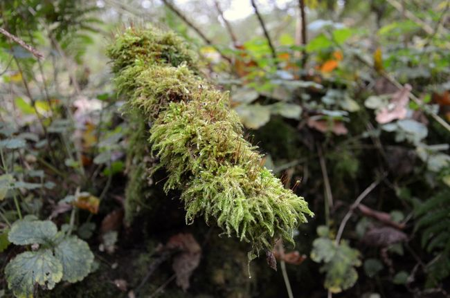Moss covered rotting tree branch Neander valley