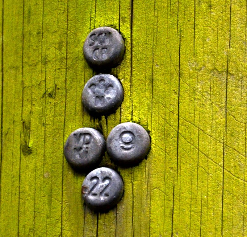 Signal Studs in Wooden Electricity Pole