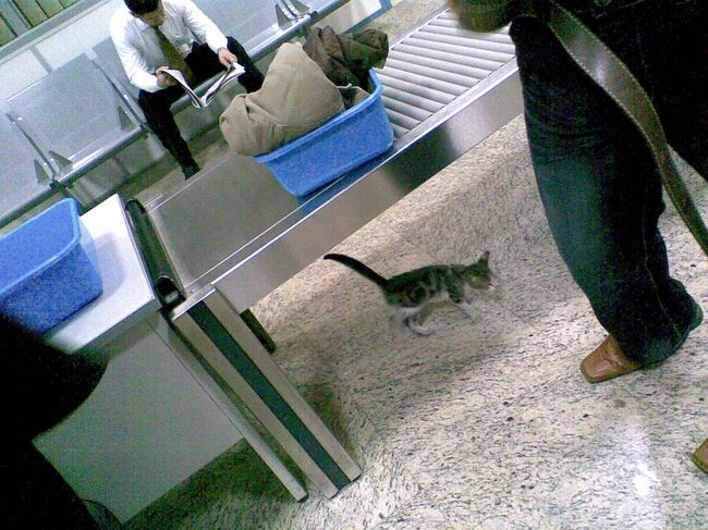 105 - Prishtina Airport Security Kitten 1